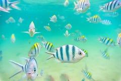 Denna ryba przy dnem morskim Obrazy Stock
