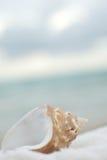 denna skorupa Fotografia Royalty Free