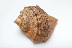 Denna skorupa jako pamiątka, prezent od morza Zako?czenie obrazy stock