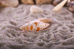 Denna skorupa na plaży obraz royalty free