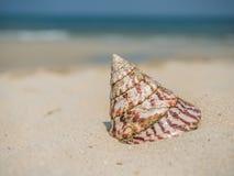 Denna skorupa na plaży Obrazy Royalty Free