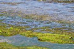 Denna trawy świrzepa na kamiennym mech w Bali przy plażą obraz stock