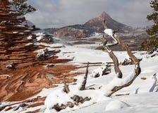 Denna vinterplats har slickrock, windblown snö, deadwood och berg fotografering för bildbyråer