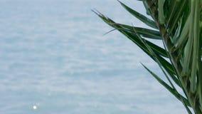 Denne fala z drzewko palmowe gałąź przy przedpolem zdjęcie wideo