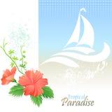 Denne grafika serie - plaże i rejs w Bahamas ilustracji