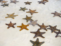 Denne gwiazdy Fotografia Royalty Free