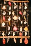 Denne skorupy Fotografia Stock