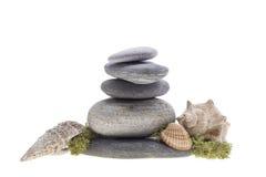 Denne skorupy na kamieni wierza Zdjęcia Stock