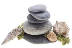 Denne skorupy na kamieni wierza Fotografia Stock