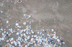 Denne skorupy na piaska lata plaży Obrazy Royalty Free