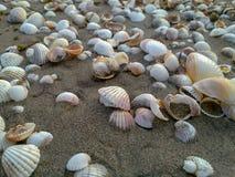 Denne skorupy tworzą ślad na piasku przy caspian plażą, Iran, Gilan fotografia stock