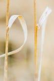 Denne traw kropki, bokhe i Fotografia Royalty Free
