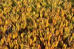 Denne trawy Obraz Stock