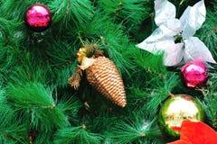 Denneappel bij Kerstmisboom Royalty-vrije Stock Foto's