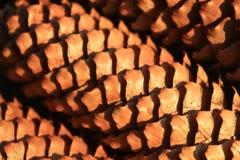 Denneappel, close-up van denneappels, aard, bos Stock Fotografie