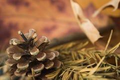 Denneappel die door bladeren van de de herfst de droge spar en esdoornbladeren wordt omringd Royalty-vrije Stock Afbeelding