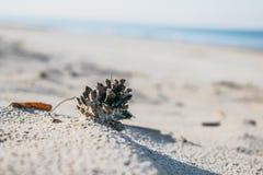 Denneappel die op strand leggen Stock Afbeelding
