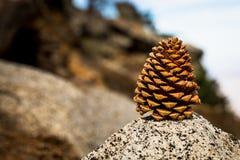 Denneappel op de berg van de palmlente Stock Afbeelding