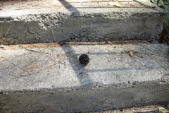 Denneappel op de oude trap Stock Foto's