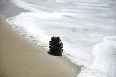 Denneappel op het zandige strand dichtbij het water Concept ontspanning, meditatie, ecologisch naturalness, godsdienstigheid royalty-vrije stock foto