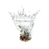 Denneappelplons op water, op witte achtergrond wordt geïsoleerd die Royalty-vrije Stock Afbeeldingen