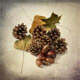 Denneappels en de herfstbladeren Stock Afbeeldingen