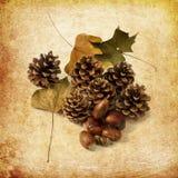 Denneappels en de herfstbladeren Stock Fotografie