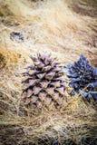 Denneappels in Top Nationaal Park royalty-vrije stock foto