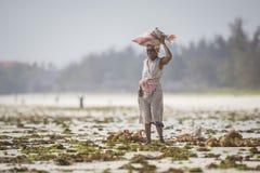 Dennego świrzepy żniwa zagrożona opłata temperatury wody wydźwignięcie Zdjęcie Royalty Free