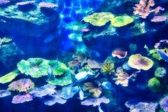 Dennego życia akwarium w Bangkok zdjęcie stock