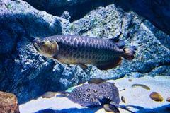Dennego życia akwarium w Bangkok fotografia royalty free