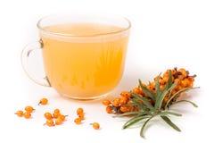 Dennego buckthorn herbata z sprig odizolowywającym na białym tle Obraz Royalty Free