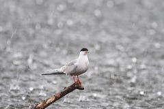 dennego frajera pozycja nad morze w ulewnym deszczu zdjęcie royalty free