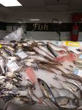Dennego jedzenia zupna garnela przy rybiego rynku promocją Obrazy Royalty Free