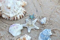 Dennej gwiazdy i morza skorupy na piasku Fotografia Royalty Free