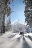 Dennenbos met sneeuw Royalty-vrije Stock Foto