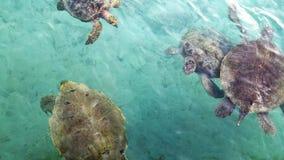 Denni żółwie Obrazy Stock