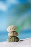 Denni czesacy na białej piasek plaży Zdjęcia Royalty Free