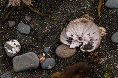 Denni czesacy, skorupy i gałęzatka na brzeg, Obraz Stock