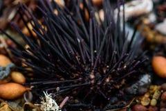 Denni czesacy, skorupy i gałęzatka na brzeg, Obrazy Stock