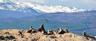 Denni lwy na skale z górami w tle obraz stock