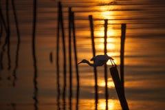 Denni ptaki Obrazy Stock