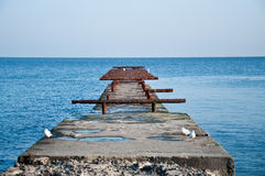 denni seagulls Zdjęcie Royalty Free