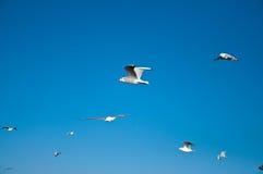 denni seagulls Obrazy Royalty Free