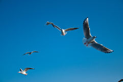 denni seagulls Obrazy Stock