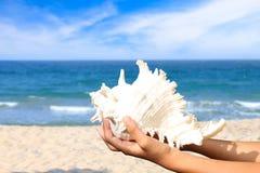 denni shellfish Fotografia Stock