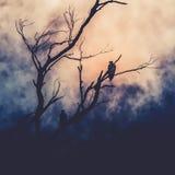 Denni orły siedzi w drzewie Obrazy Royalty Free