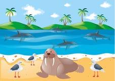 Denni zwierzęta i gołębie na plaży Obraz Royalty Free