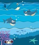Denni zwierzęta pod oceanem Zdjęcie Stock