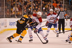 Dennis Seidenberg Boston Bruins Royalty Free Stock Photo